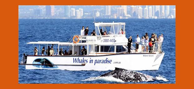 Whales-In-Paradise-Whale-Watching-Gold-Coast