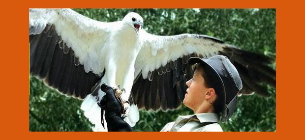 Cairns-Tropical-Zoo-Birds-of-Flight-Cairns-Day-Tours-Port-Douglas-Day-Tours