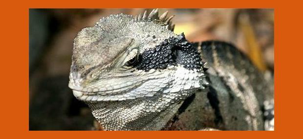 Port-Douglas-Day-Tour-Cairns-Day-Tour-Cairns-Tropical-Zoo-Australian-Lizard
