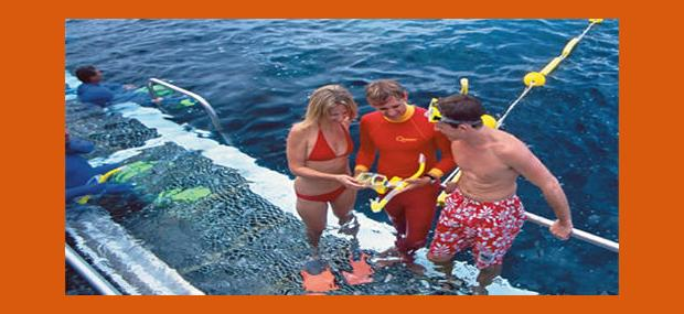 Quicksilver-Outer-Great-Barrier-Reef-Tour-Pontoon-Snorkelling